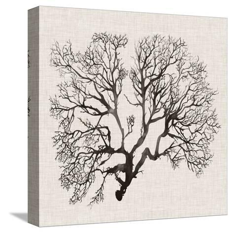 Shadow Sea Fan III-Grace Popp-Stretched Canvas Print