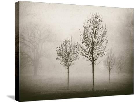 Trees in Fog VII-Jody Stuart-Stretched Canvas Print