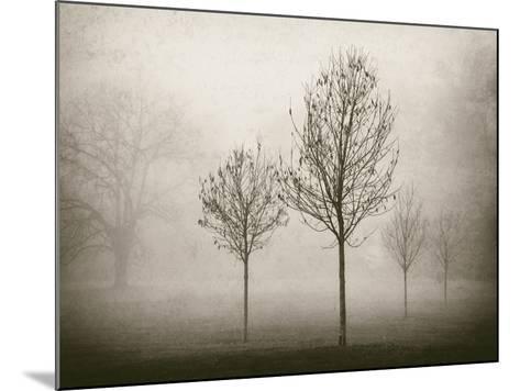 Trees in Fog VII-Jody Stuart-Mounted Photographic Print