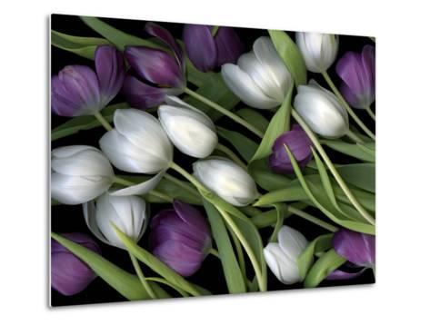 Medley of Beautiful Fresh White and Purple Tulips-Christian Slanec-Metal Print