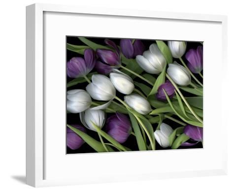 Medley of Beautiful Fresh White and Purple Tulips-Christian Slanec-Framed Art Print