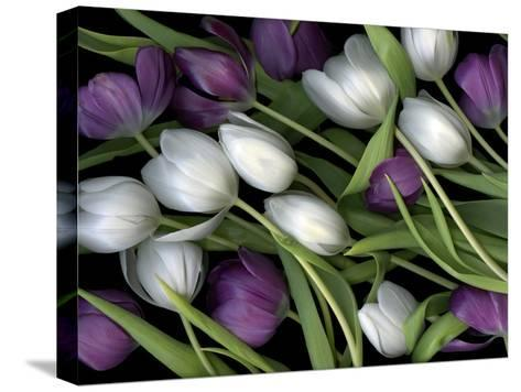 Medley of Beautiful Fresh White and Purple Tulips-Christian Slanec-Stretched Canvas Print