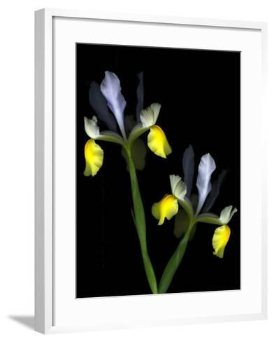 Two Orchid Flowers Isolated on Black Background-Christian Slanec-Framed Art Print