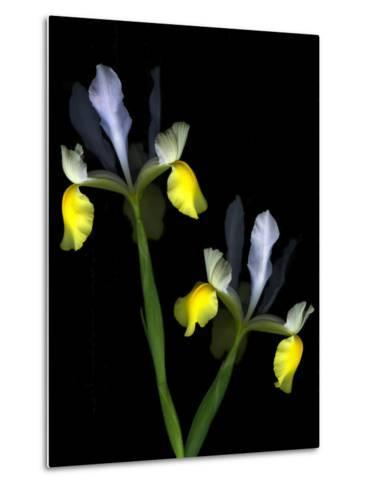 Two Orchid Flowers Isolated on Black Background-Christian Slanec-Metal Print