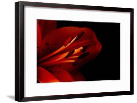 Orange Lily Against Black Background-Jennifer Peabody-Framed Art Print