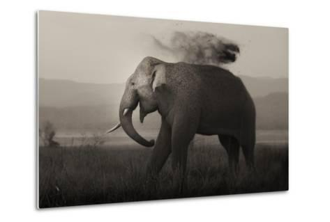 Tusker in Rain-Ganesh H Shankar-Metal Print