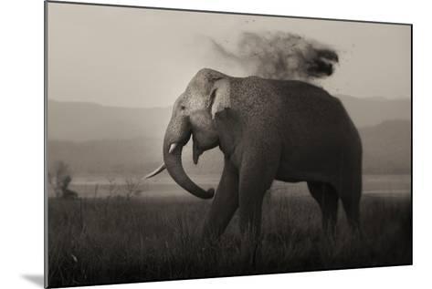 Tusker in Rain-Ganesh H Shankar-Mounted Photographic Print