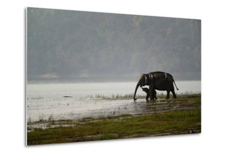 Elephants in Water-Ganesh H Shankar-Metal Print
