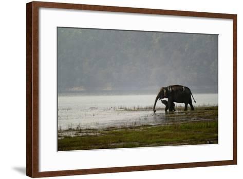Elephants in Water-Ganesh H Shankar-Framed Art Print