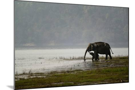 Elephants in Water-Ganesh H Shankar-Mounted Photographic Print
