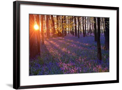 Bluebells at Sunset-Inguna Plume-Framed Art Print