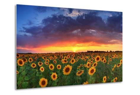 Beautiful Field of Sunflowers on the Sunset Background-Anton Petrus-Metal Print