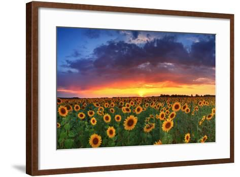 Beautiful Field of Sunflowers on the Sunset Background-Anton Petrus-Framed Art Print