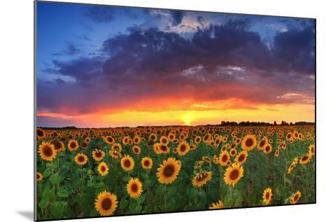 Beautiful Field of Sunflowers on the Sunset Background-Anton Petrus-Mounted Photographic Print