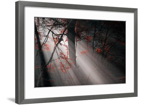 Red Colors and Subeams in the Forest-Gufoto-Framed Art Print