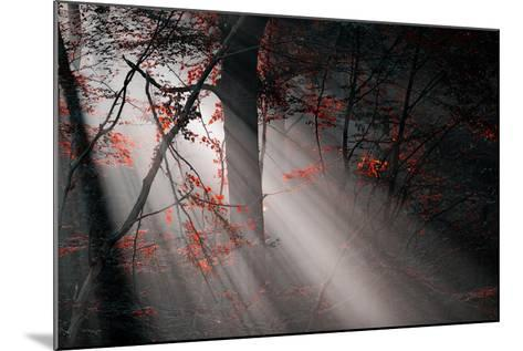 Red Colors and Subeams in the Forest-Gufoto-Mounted Photographic Print