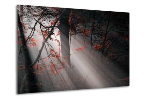 Red Colors and Subeams in the Forest-Gufoto-Metal Print