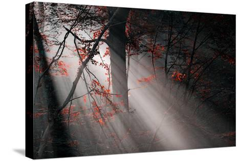 Red Colors and Subeams in the Forest-Gufoto-Stretched Canvas Print