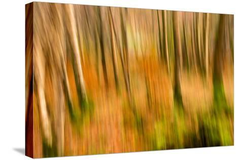 Abstract Shot of Autumnal Woodland in Grasmere, Lake District Cumbria England Uk-Tracey Whitefoot-Stretched Canvas Print