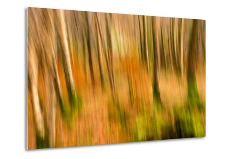 Abstract Shot of Autumnal Woodland in Grasmere, Lake District Cumbria England Uk-Tracey Whitefoot-Metal Print
