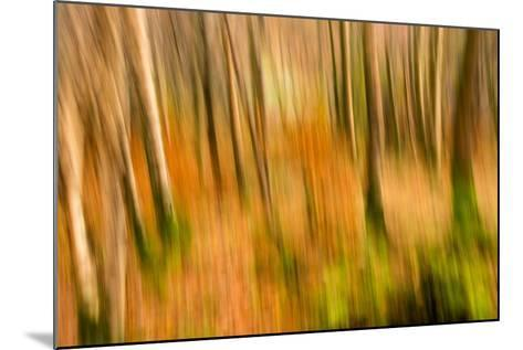 Abstract Shot of Autumnal Woodland in Grasmere, Lake District Cumbria England Uk-Tracey Whitefoot-Mounted Photographic Print