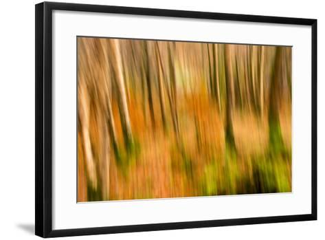 Abstract Shot of Autumnal Woodland in Grasmere, Lake District Cumbria England Uk-Tracey Whitefoot-Framed Art Print