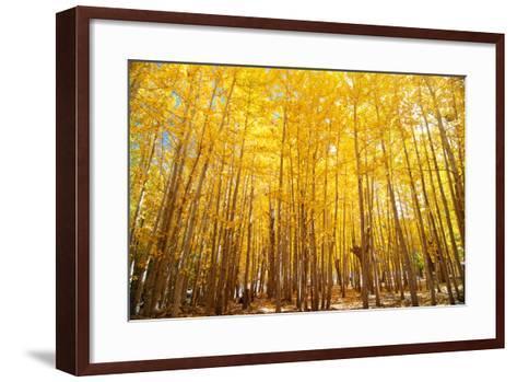 Wide Angle Fall Aspen Trees-szefei-Framed Art Print