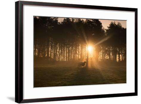 Golden Morning Light Through Trees in the Peak District, Derbyshire England Uk-Tracey Whitefoot-Framed Art Print