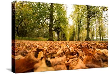 Autumn on Lime Tree Avenue, Clumber Nottinghamshire England Uk-Tracey Whitefoot-Stretched Canvas Print