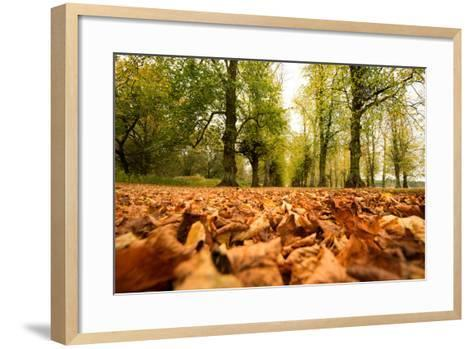 Autumn on Lime Tree Avenue, Clumber Nottinghamshire England Uk-Tracey Whitefoot-Framed Art Print