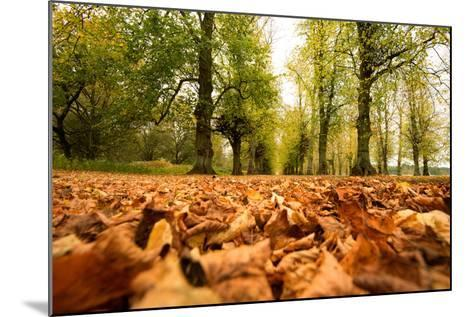 Autumn on Lime Tree Avenue, Clumber Nottinghamshire England Uk-Tracey Whitefoot-Mounted Photographic Print
