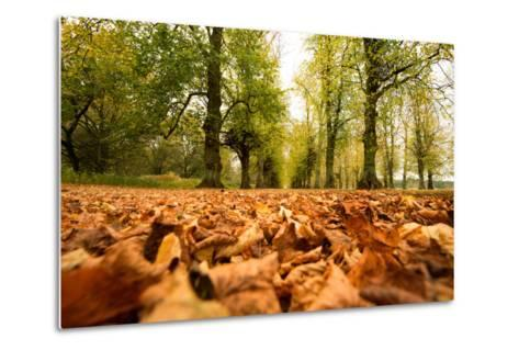 Autumn on Lime Tree Avenue, Clumber Nottinghamshire England Uk-Tracey Whitefoot-Metal Print