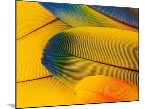 Blue and Gold Macaw Parrot Feathers-Travis Owenby-Mounted Photographic Print