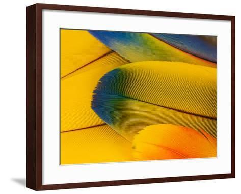 Blue and Gold Macaw Parrot Feathers-Travis Owenby-Framed Art Print
