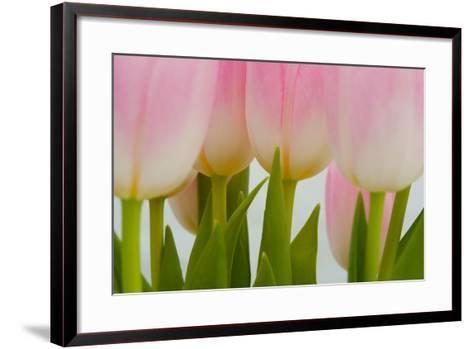 Abstract Pink Tulips-Louise Elder-Framed Art Print