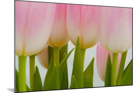 Abstract Pink Tulips-Louise Elder-Mounted Photographic Print