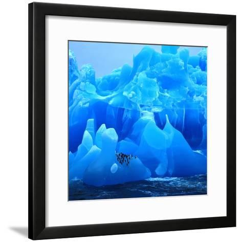 Bearded Penguin, Chinstrap Penguin (Pygoscelis Antarctica, Pygoscelis Antarcticus), Antarctica- Blickwinkel-Framed Art Print