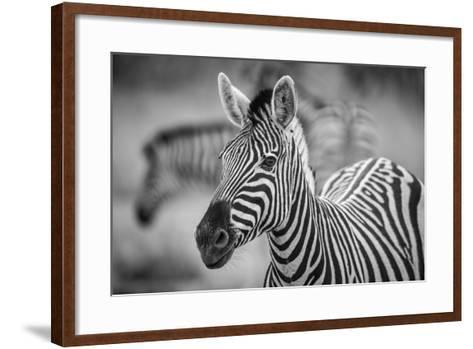 A Herd of Zebra Grazing in the Early Morning in Etosha, Namibia-Udo Kieslich-Framed Art Print