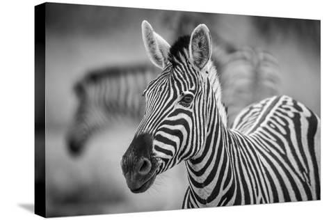 A Herd of Zebra Grazing in the Early Morning in Etosha, Namibia-Udo Kieslich-Stretched Canvas Print