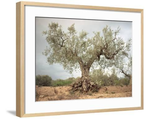 An Old Olive Tree-Roland Andrijauskas-Framed Art Print