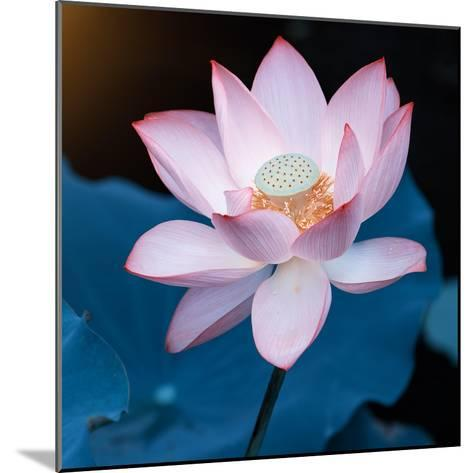 Lotus Flower Blooming on Pond-Wu Kailiang-Mounted Photographic Print