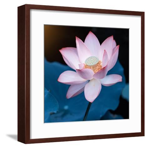 Lotus Flower Blooming on Pond-Wu Kailiang-Framed Art Print