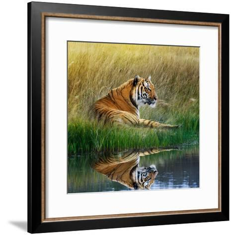 Tiger Relaxing on Grassy Bank with Reflection in Water-Svetlana Foote-Framed Art Print