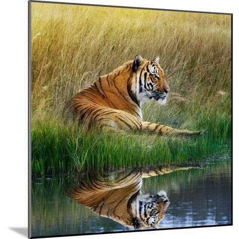 Tiger Relaxing on Grassy Bank with Reflection in Water-Svetlana Foote-Mounted Photographic Print