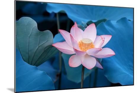 Lotus Flower-Wu Kailiang-Mounted Photographic Print