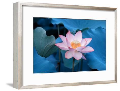 Lotus Flower-Wu Kailiang-Framed Art Print