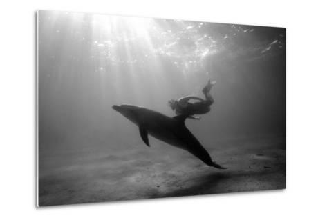 A Black and White Image of a Bottlenose Dolphin and Snorkeller Interacting Contre-Jour-Paul Springett-Metal Print