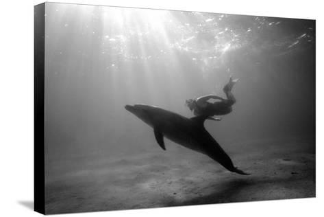 A Black and White Image of a Bottlenose Dolphin and Snorkeller Interacting Contre-Jour-Paul Springett-Stretched Canvas Print