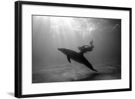 A Black and White Image of a Bottlenose Dolphin and Snorkeller Interacting Contre-Jour-Paul Springett-Framed Art Print