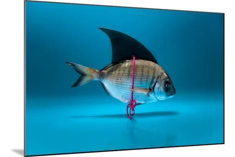 Fish Disguised as a Shark- Antonioiacobelli-Mounted Photographic Print